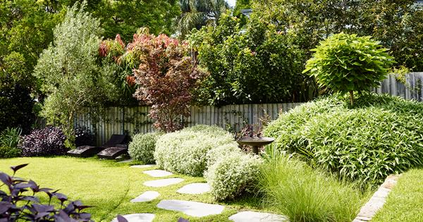 10 trees to plant in backyards big or small   Homes To Love
