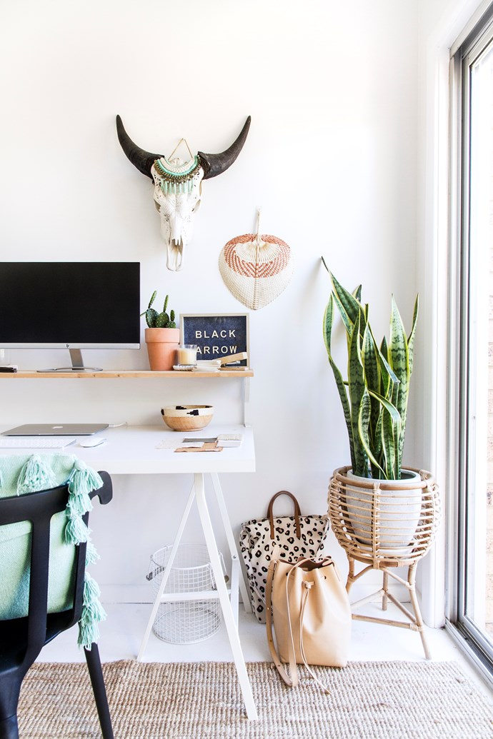 Indoor plants are a stylist's best friend. *Styling: Black Arrow Co | Photography: The Palm Co.*