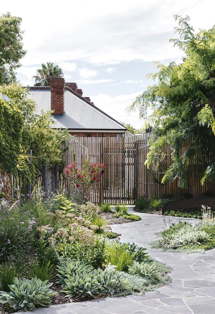 "**Pathway** This garden behind an 1880s worker's cottage in Adelaide has been transformed. ""I'm a massive advocate for giving people a reason to enjoy a garden – to be drawn out into it,"" says landscape designer Brett Robinson. Korean velvet grass (*Zoysia tenuifolia*) has been planted under the jacaranda tree and red crepe myrtles (*Lagerstroemia indica x fauriei 'Tonto'*) flank the path. The mounded flowerbeds add interest."