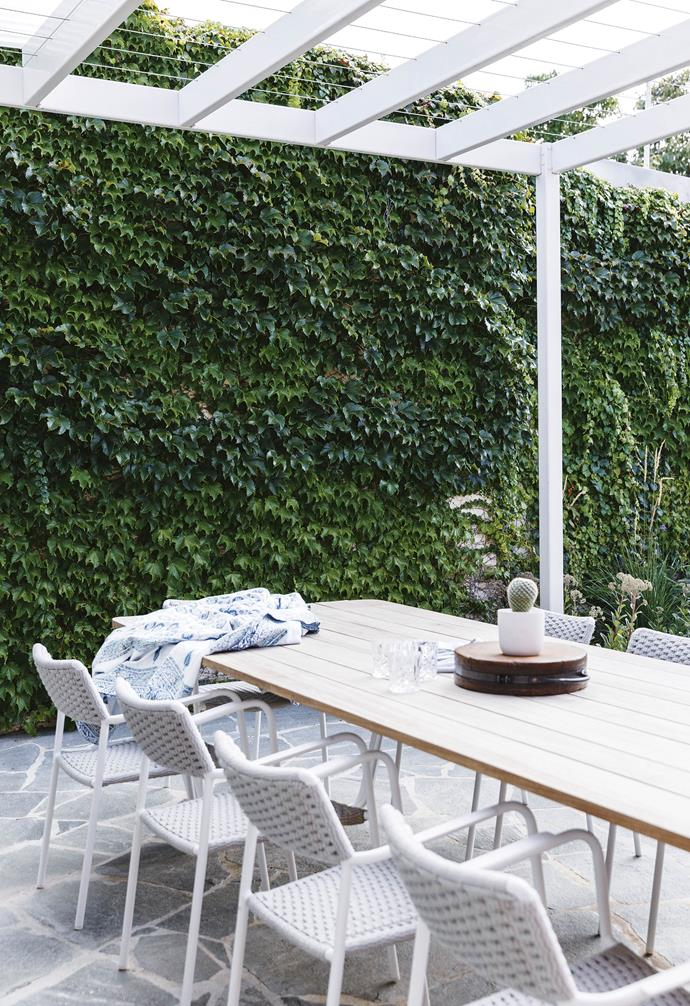 **Entertaining area** The pergola delineates the outdoor dining zone. A wall of ivy adds movement beside the Manutti 'Air' table and 'Echo' chairs, both from Cosh Living.