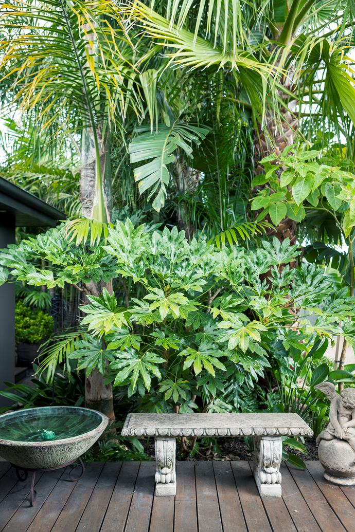 Aralia (Fatsia japonica), with its large, hand-like leaves, forms a lush mid-storey under the taller palms.