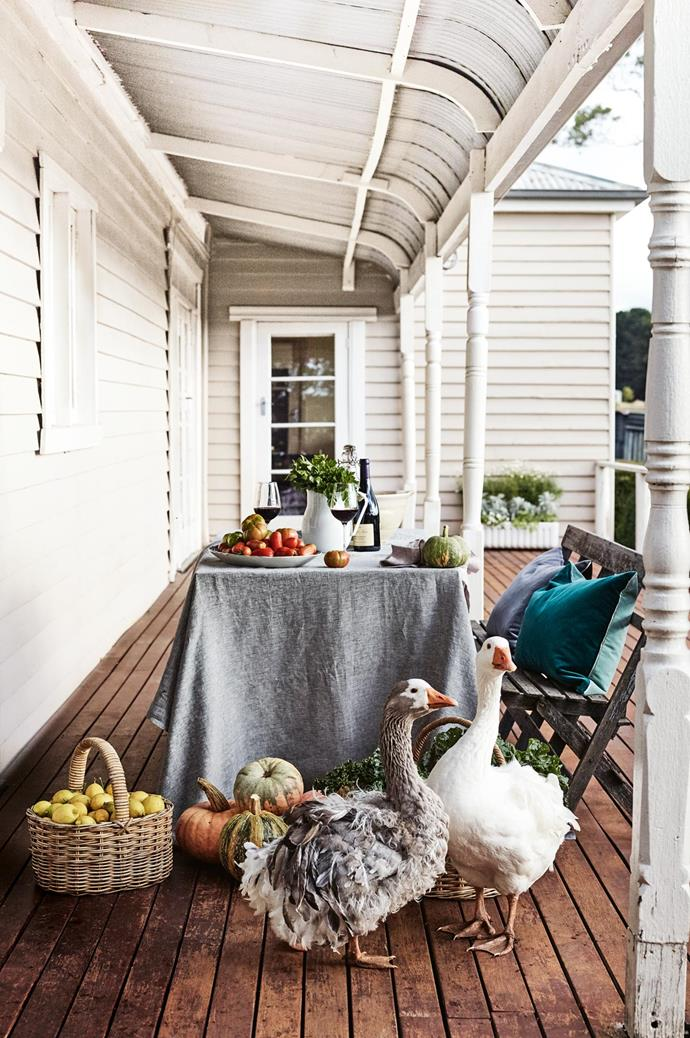"Inquisitive free-ranging Sebastopol geese, with their distinctive ruffled feathers, check out the [autumn harvest](https://www.homestolove.com.au/top-autumn-gardening-tips-3215|target=""_blank"") on the verandah at Babbington Park. ""It was a huge move here,"" says Annie's partner Susan. ""It was our two households, my two girls, 50 chickens, four cats, three geese, two dogs, two guinea pigs... and a long-suffering budgie!"""