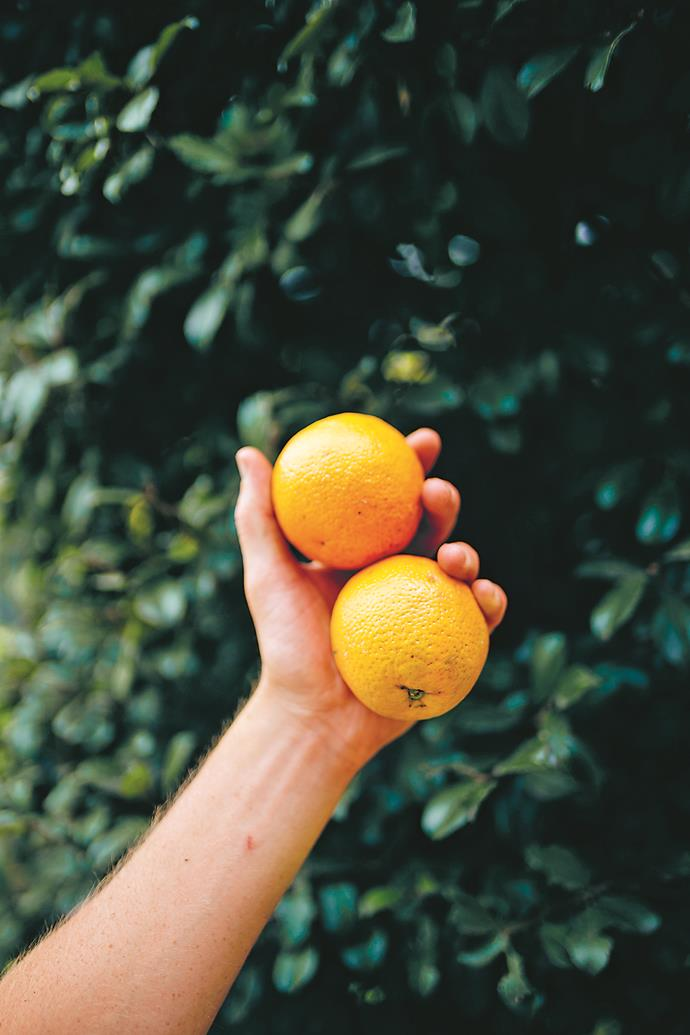 Oranges (Citrus sinesis; Rutaceae) not only taste great, but can add a pop of colour to any garden.