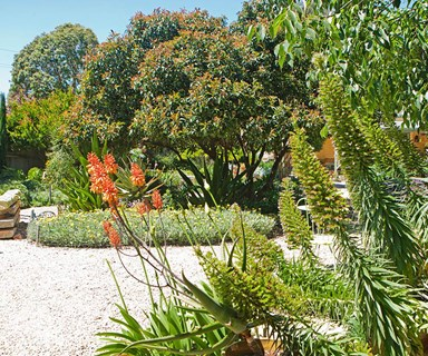 How help your garden survive a drought