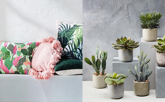 "SHOP: Santa Clara 45x45cm cushion in green/pink, $44; Florida round cushion in peach, $49; [Fontana cushion in tropical](https://www.domayne.com.au/fontana-cushion-tropical.html target=""_blank"" rel=""nofollow""), $39; Kew cushion in ivy, $35; [Needle succulent potted 23cm](https://www.domayne.com.au/needle-succulent-decorator-23cm-plant.html target=""_blank"" rel=""nofollow""), $39; Desert succulent potted 20cm, $39; Agave in concrete pot 23cm, $49; Desert cactus potted 31cm, $49; Succulent in cement pot 17cm, $24; Desert cactus potted 32cm, $49."