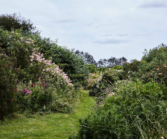 """Tom's garden dreams were born from an encounter with local rosarian and author Susan Irvine, who delivered a talk on Scots roses. """"She mentioned a book by Mary McMurtrie called 'Scots Roses of Hedgerows and Wild Gardens',"""" he recalls. """"She described a hillside garden planted with broad sweeps of [wild roses](https://www.homestolove.com.au/a-wild-victorian-garden-19645 target=""""_blank""""), heath and cistus..."""""""
