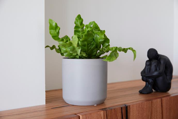 """Man **bookends**, $59, from [White Moose](https://www.whitemoose.com.au/collections/as-seen-on-the-block/products/man-bookends-black?variant=3012939939880