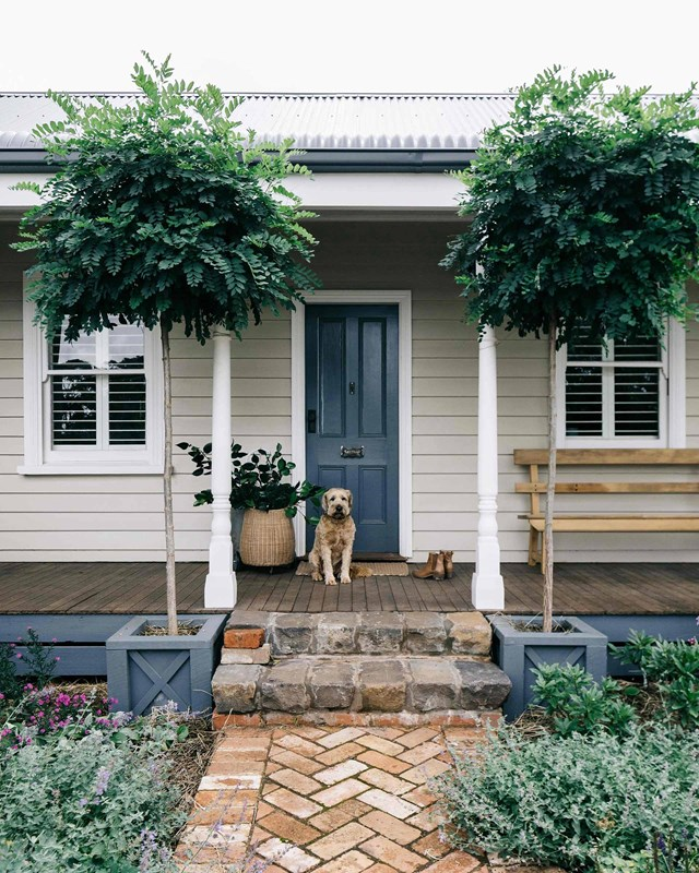 "Keegan the Irish wheaten terrier greets visitors at Acre of Roses, a [19th-century cottage and flower farm](https://www.homestolove.com.au/flower-farm-property-victoria-18945|target=""_blank"") in Trentham, Victoria. Two trees either side of the front door, which is painted in Dulux Blue Ridge, create a welcoming sense of symmetry, framing the entrance to the charming home."