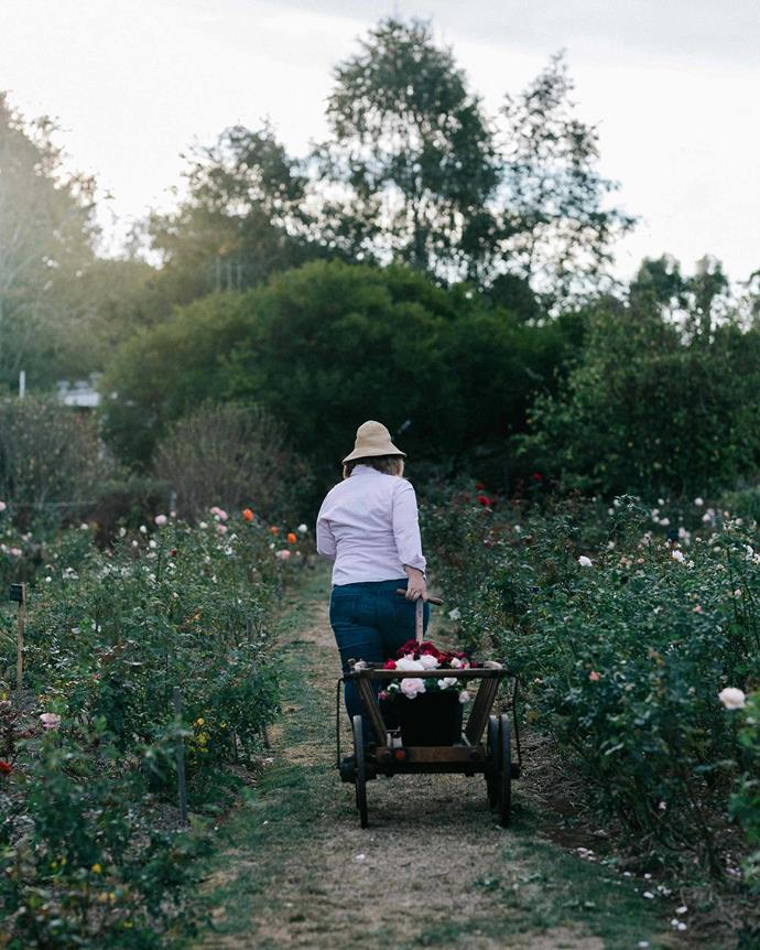 Sandy uses an old picking trolley she found in a prop shop when cutting roses. *Photography: Marnie Hawson*