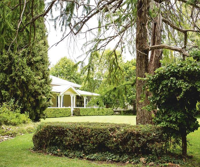 "The strong structure of [established trees](https://www.homestolove.com.au/an-established-springtime-garden-in-the-dandenong-ranges-19027|target=""_blank"") was laid by Hugh's grandmother. Hugh himself applies an artistry to plant selection, ""creating green-on-green contrast through leaf shape, tone and height."""