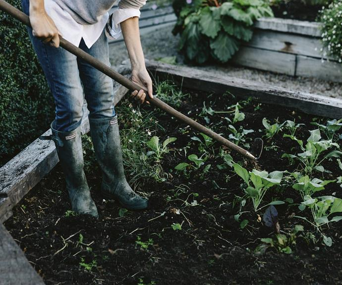 """These days their attention is mostly on the [garden and landscaping](https://www.homestolove.com.au/5-landscaping-solutions-for-small-gardens-4900