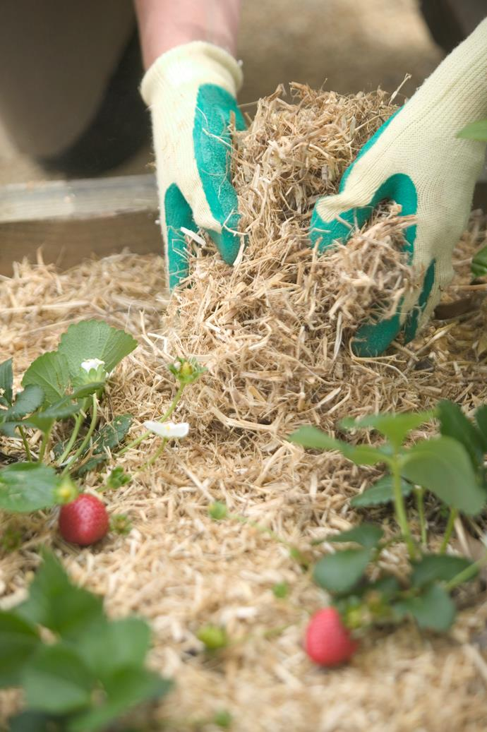 Mulching improves soil quality and prevents weed growth.