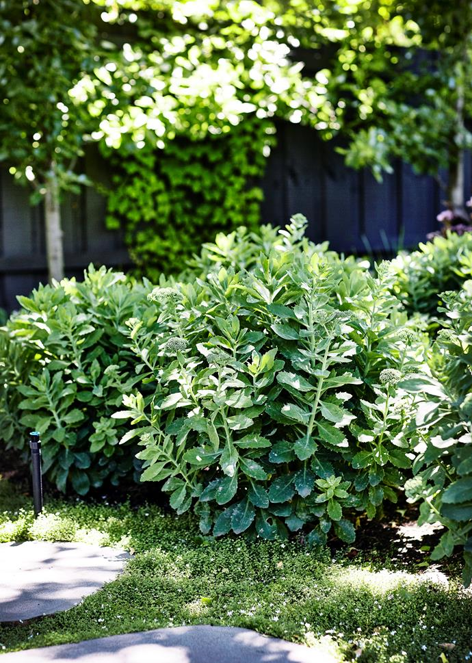 A few stray water droplets won't stop your garden from looking lush and green.