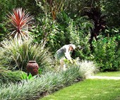 5 gardening myths you can ignore this summer