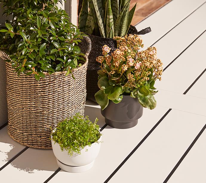 It's no secret lush greenery brings an outdoor area to life.  *Photo: Supplied*