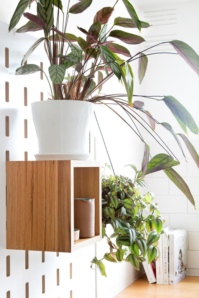 The wall-mounted modular shelving system houses functional and decorative pieces like ceramics and indoor plants. *Photo:* Shania Shegedyn