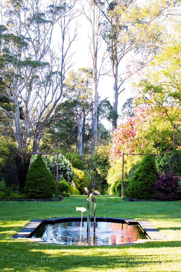 The 'walled' garden features a reflection pond with a copper-fish fountain, two white spruce (Picea glauca 'Conica') on either side of the entrance and, in the background, towering mountain ash (Eucalyptus regnans), the local species.