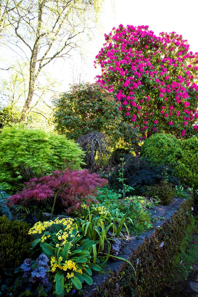 A well-established rock garden at the back of the house features alpine plants and bulbs, Japanese maples (Acer palmatum 'Dissectum'), weeping beech (Fagus sylvatica 'Pendula') and large rhododendrons.