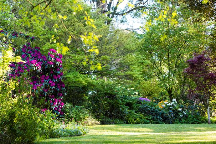 Rhododendrons, Acer japonicum 'Aconitifolium' and Magnolia denudata border a well-manicured lawn.