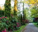 An established springtime garden in the Dandenong Ranges