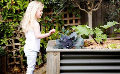 How to get the best out of your spring vegie patch