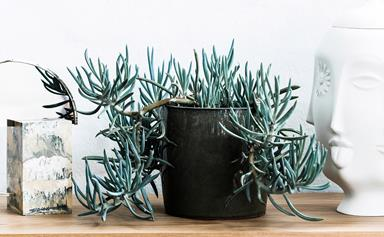 Indoor plants: 6 ways you might be accidentally be killing them