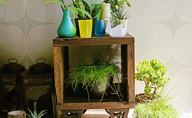 How to keep your potted plants in tip top condition