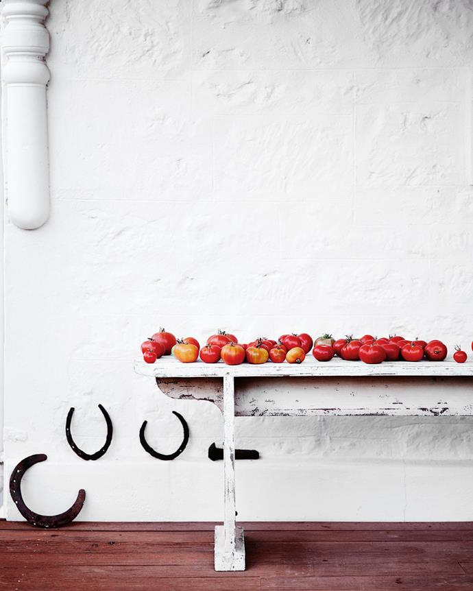 Homegrown tomatoes on the verandah bench. *| Photography: Mark Roper | Styling: Tess Newman-Morris*