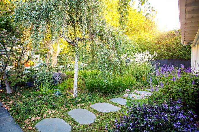 """Dichondra repens has been planted between the bluestone path steppers. """"I love a green and purple palette,"""" says Ben. """"It works well with the bluestone."""""""