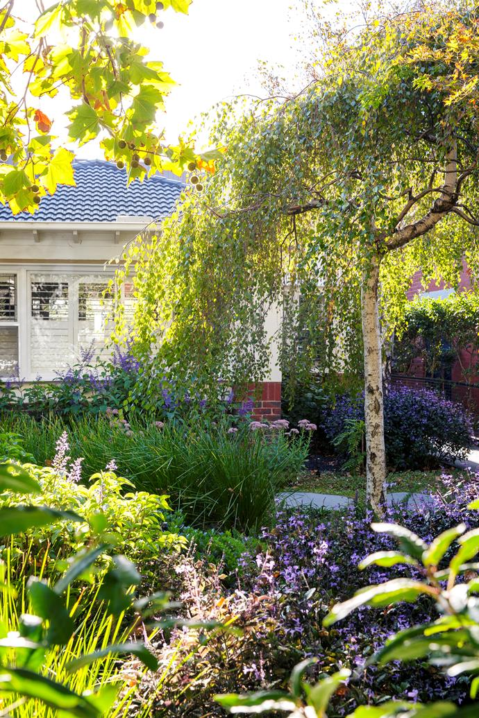 In the front garden, Ben focused on creating texture using a mix of traditional, structural plants.