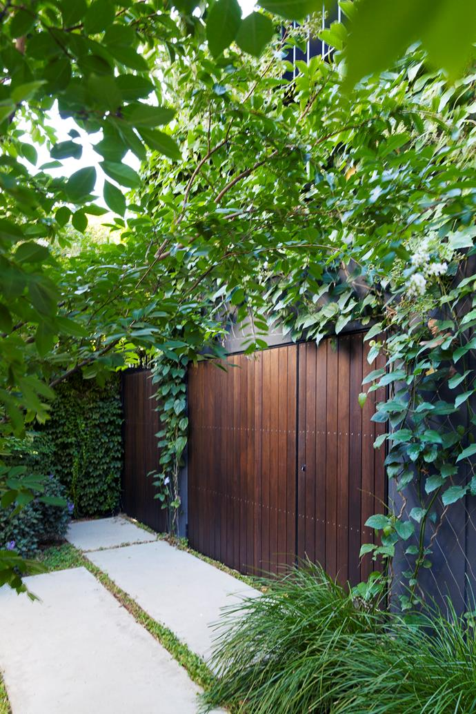 The gate to the garage is framed by blue trumpet vine (Thunbergia laurifolia).