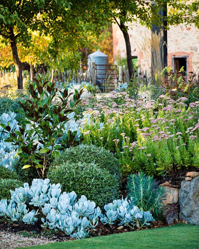 """**MOVEMENT AND TEXTURE** <br></br> Foliage of drought-hardy succulents and clipped shrubs may take centre stage in this garden bed, but it's the desaturated blooms of sedum that provide movement and texture. Other perennial flowers featured throughout this [Adelaide garden](https://www.homestolove.com.au/recycled-materials-garden-brenton-roberts-garden-designs-19115