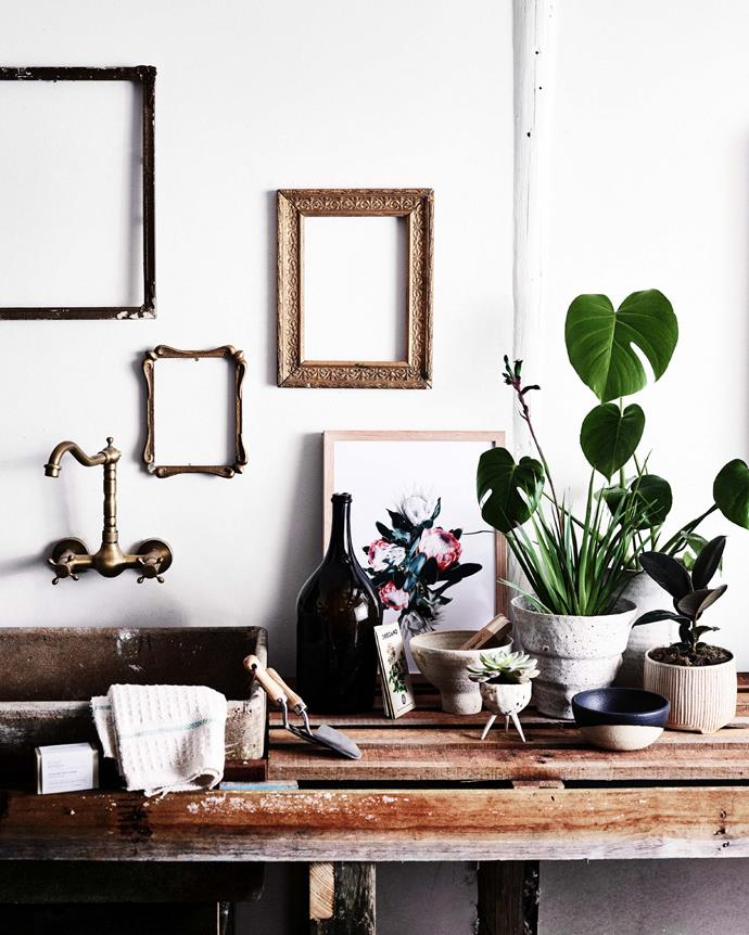 "**BLEND OLD AND NEW** <br></br>  Blend old and new by pairing your antiques or [art collection](https://www.homestolove.com.au/australian-artists-17720|target=""_blank"") with some foraged plants. If you're thinking of a display that's a little left-of-centre (and literally outside of the box), showcase your houseplants in unusual vessels. <br></br> Plants featured: monstera *(Monstera deliciosa)*, rubber tree *(Ficus elastica)*, Echeveria and red and green kangaroo paw *(Anigozanthos menglesii)*."