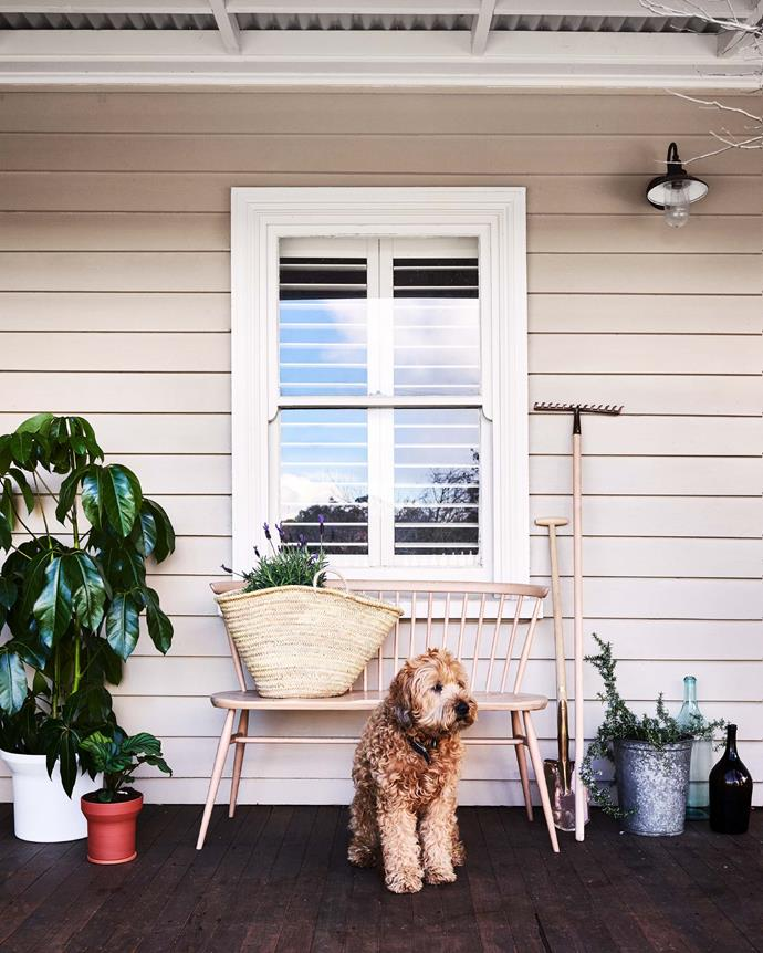 "**DON'T FORGET THE VERANDAH**  <br></br> Run out of room for indoor plants? Move the party outside by styling up your front porch or verandah with your favourite, [low-maintenance plants](https://www.homestolove.com.au/low-maintenance-indoor-plants-2878|target=""_blank""). The key is to keep things interesting by grouping plants of different varieties and heights together.  <br></br>  Key plants featured: dwarf umbrella tree *(Schefflera arboricola)*, French lavender *(Lavandula stoechas)* and rosemary 'Blue Lagoon' *(Rosmarinus officinalis)*. For a similar style of bench, try [Zanui](https://www.zanui.com.au/Ana-Bench-166602.html