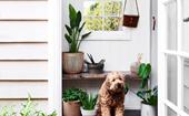 5 plant styling ideas to steal from Acre of Roses in Trentham, VIC