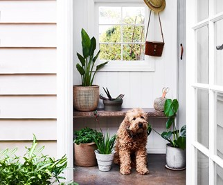 dog indoor plants garden home