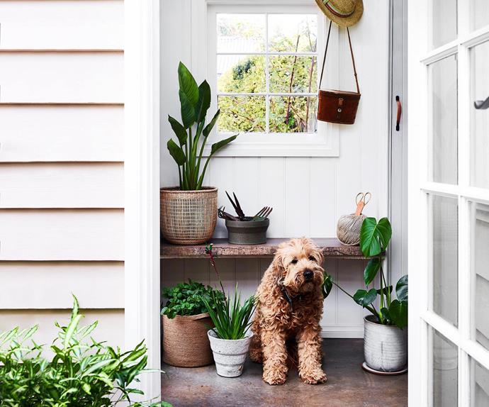 dog indoor plants garden home
