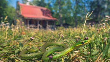 7 ways to snake-proof your house and garden