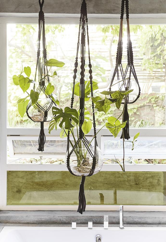 "**Suspended gardens** A well-placed [indoor hanging plant](http://www.homestolove.com.au/the-best-indoor-hanging-plants-for-australian-homes-5001|target=""_blank"") (or three) is a joy to behold – never mind the mental and health-giving benefits of surrounding yourself with greenery. Macramé hangers in elegant black provide the perfect complement to transparent glass bowls filled with lush, leafy plants, their roots intriguingly exposed."
