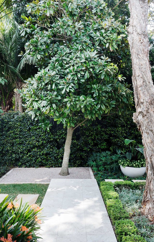 "A boundary hedge of lilly pilly (Syzygium australe 'Resilience') offsets the glossy leaves of an evergreen magnolia in this [semi-formal garden by Secret Gardens](https://www.homestolove.com.au/backyard-garden-designed-for-outdoor-living-19155|target=""_blank"")"