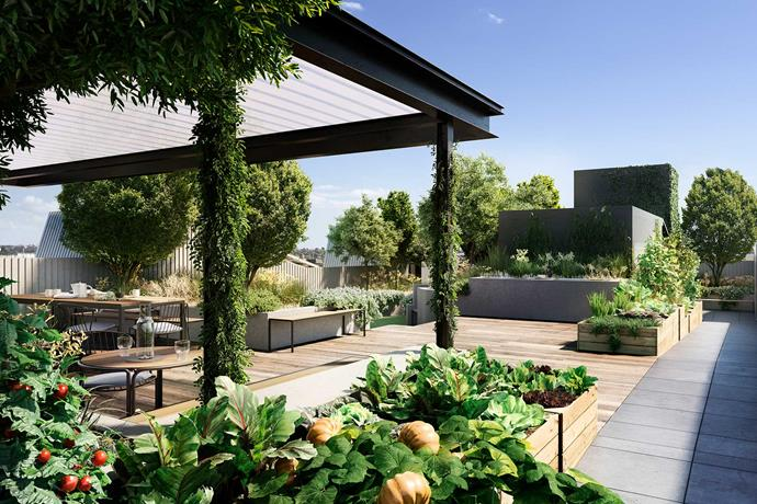 "This [rooftop garden](https://www.homestolove.com.au/create-an-environmentally-friendly-rooftop-garden-3068|target=""_blank"") is a ""backyard in the sky"" for residents of Milieu's Breese Street apartment complex. It even has its own beehives."