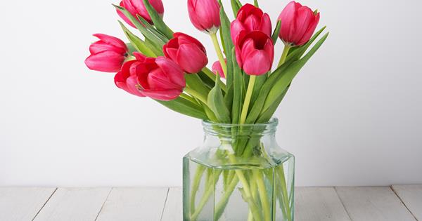 How To Grow Tulip Bulbs In A Vase Homelife