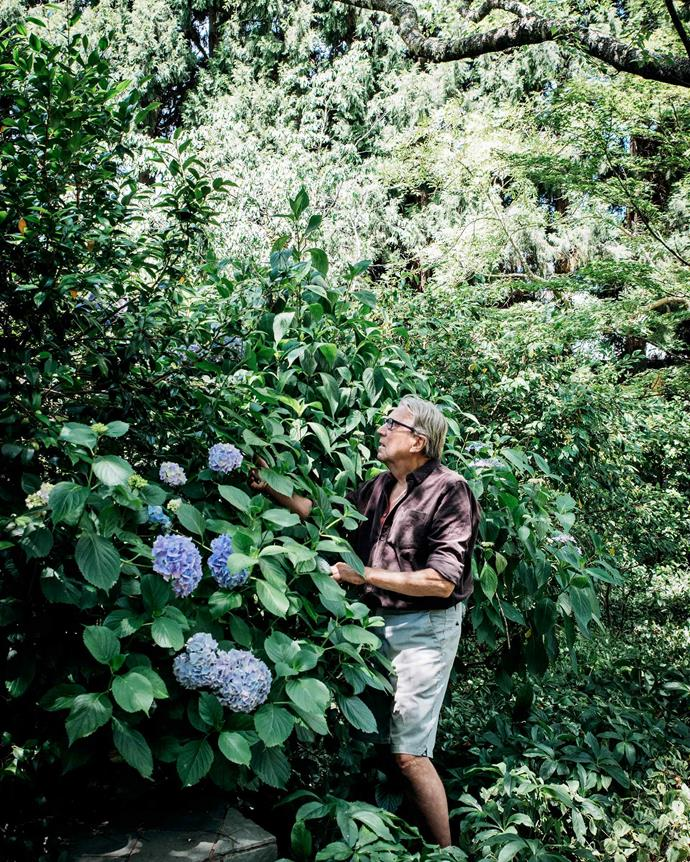 Robert tends to the flowering *Hydrangea macrophylla* shrub in his sprawling garden. | *Photography: Michael Wee*
