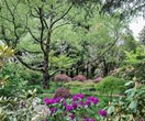 Cool climate garden blooming with native plants