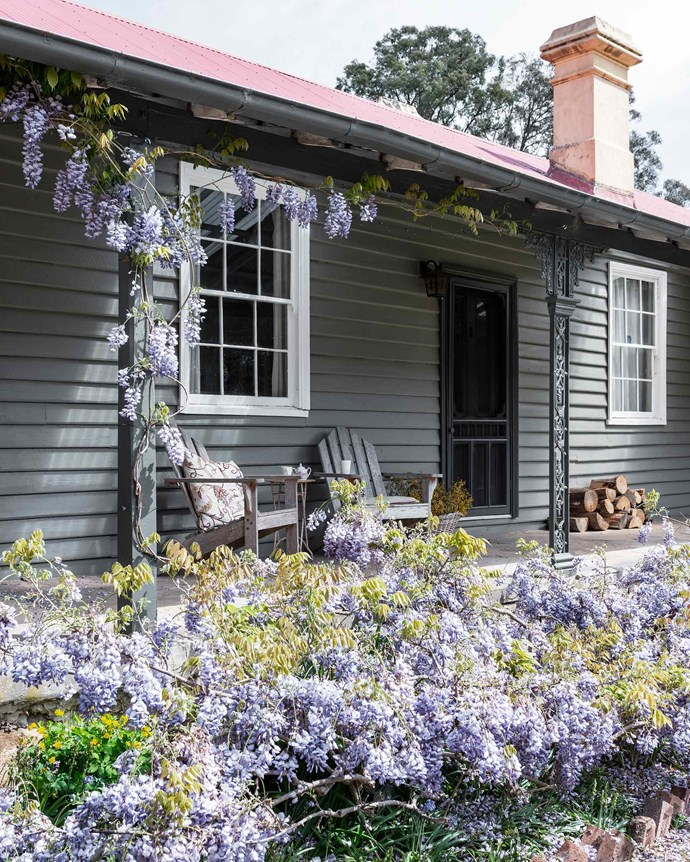 "Wisteria wraps itself around the front of this [sprawling heritage house in the Blue Mountains](https://www.homestolove.com.au/blue-mountains-antiques-heritage-house-19177|target=""_blank""). ""If only it would flower for longer!"" says Meg Thumpston, one of the seasoned collectors who own the historic property. 