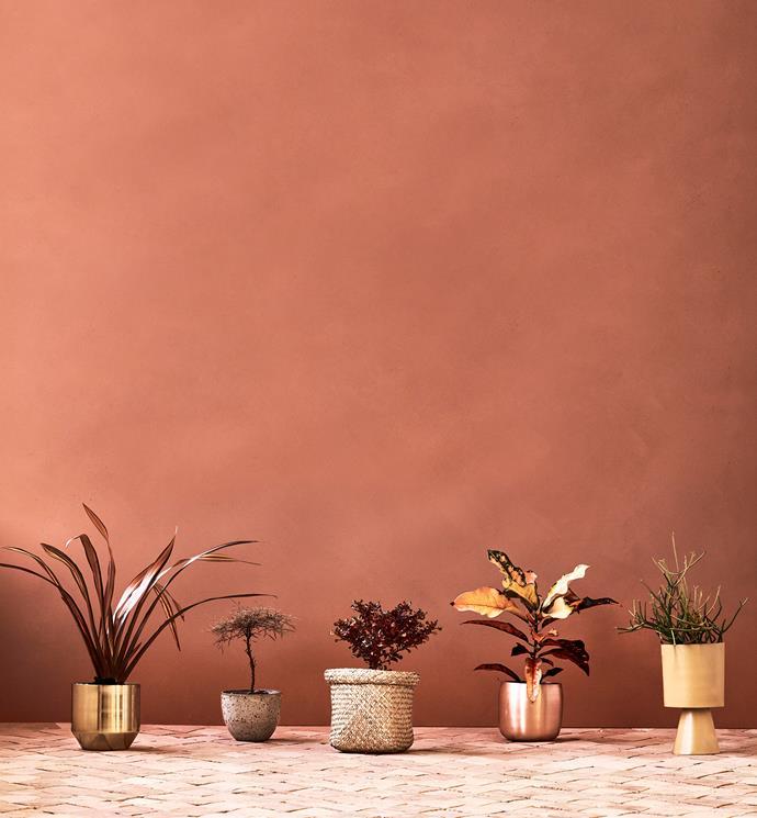**From left:** Phormium 'Veneer'; Nandina domestica 'Filamentosa'; Coprosma 'Tequila Sunrise';  Croton codiaeum 'Joseph's coat'; Euphorbia tiraculi 'Firesticks'.