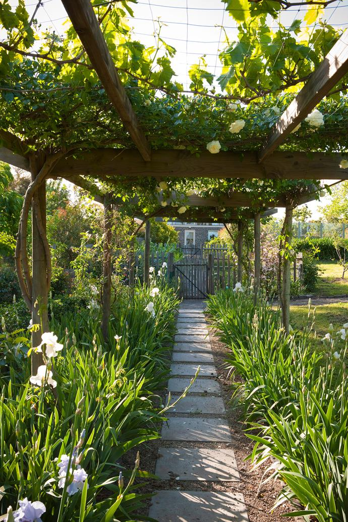A pergola is a pretty way to stop the sun from burning your shade-loving plants in summer. *Photo: Dan Magree / bauersyndication.com.au*