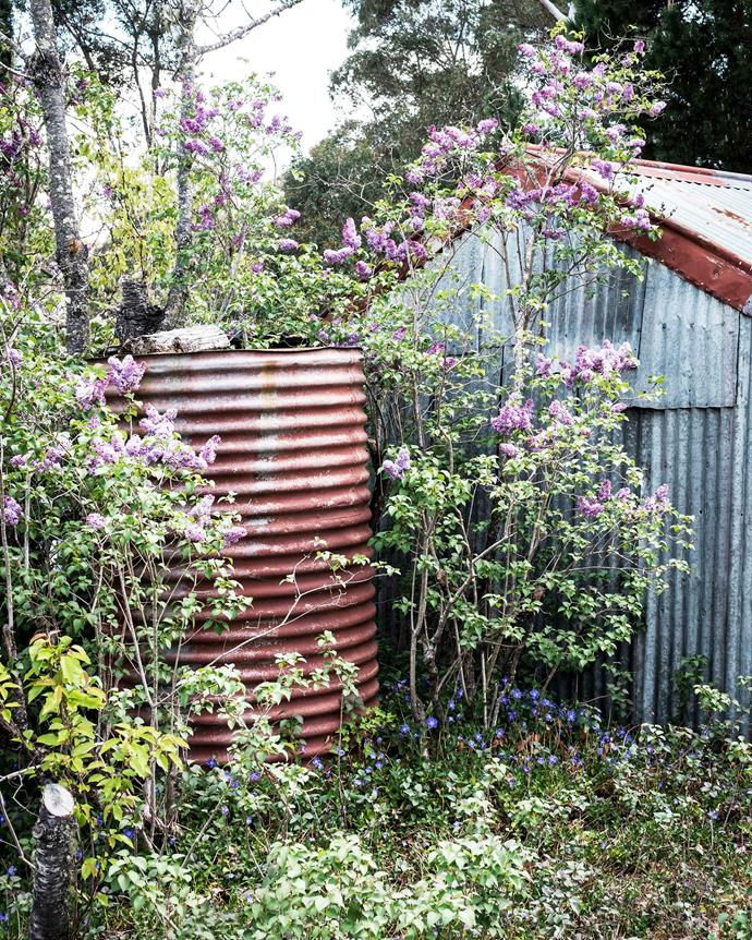Lilac trees help obscure a rusty water tank in the garage-cum-toolshed.