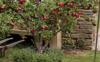 How to prune fruit trees in three simple steps