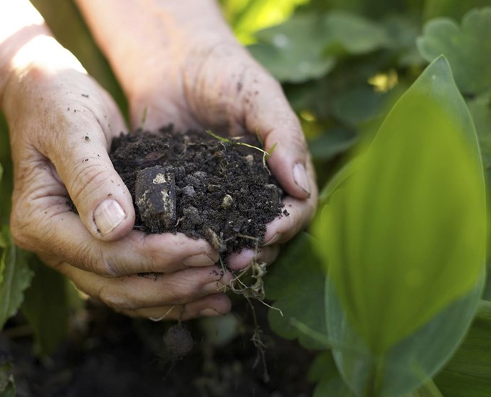 The worm waste will help keep your plants happy.